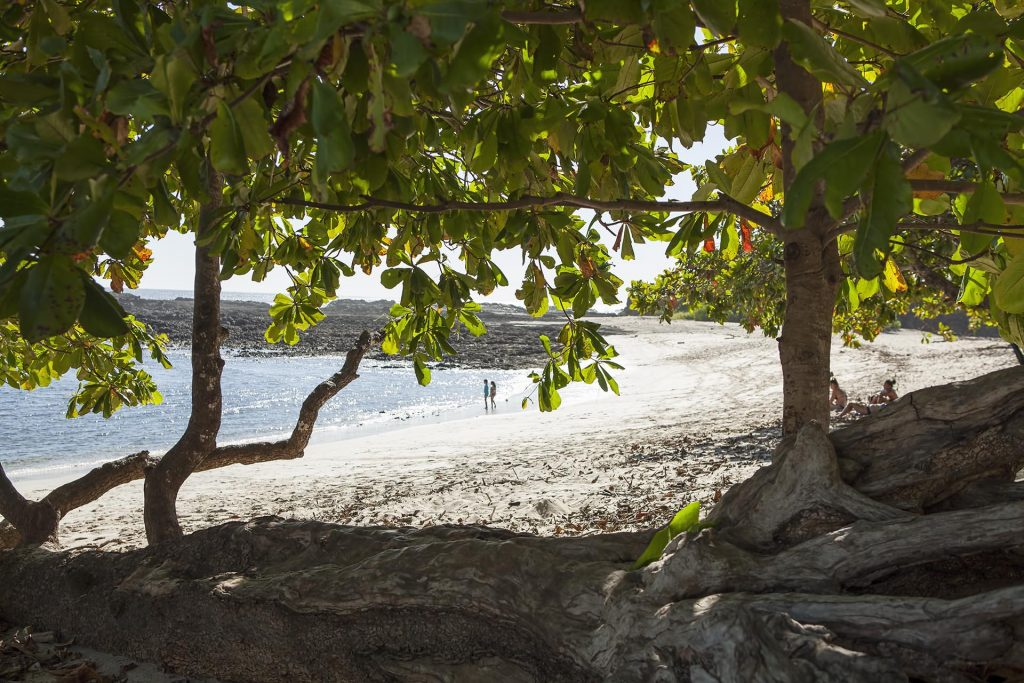Beach_from_tree