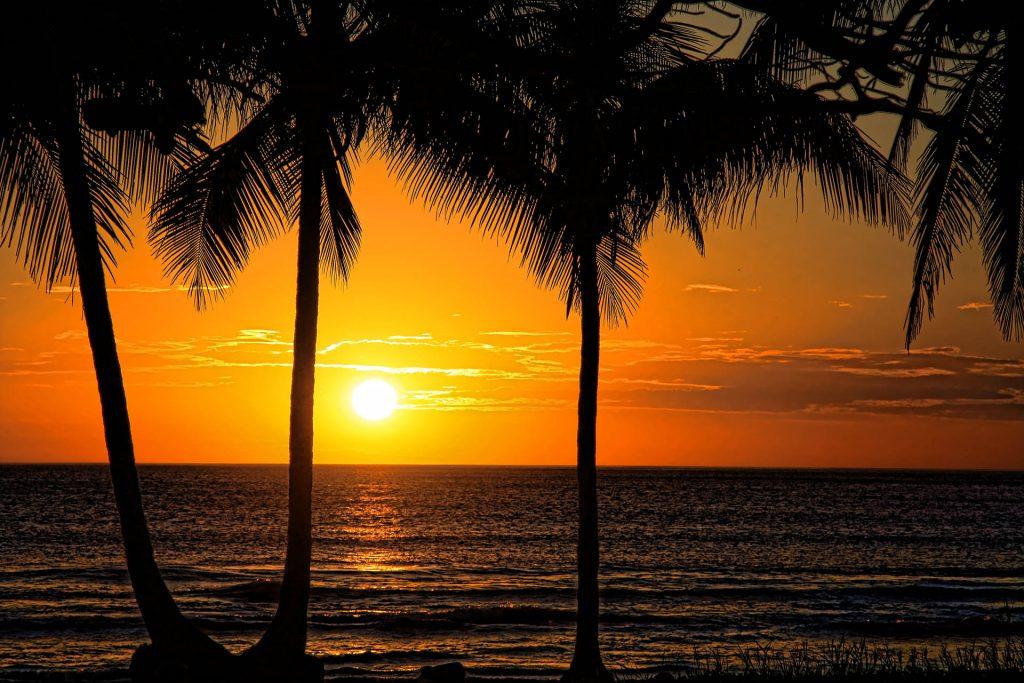 Sunset_palms